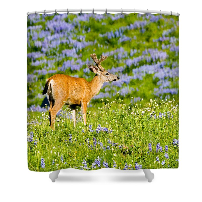Deer Shower Curtain featuring the photograph Velvet On Lupine by Mike Dawson