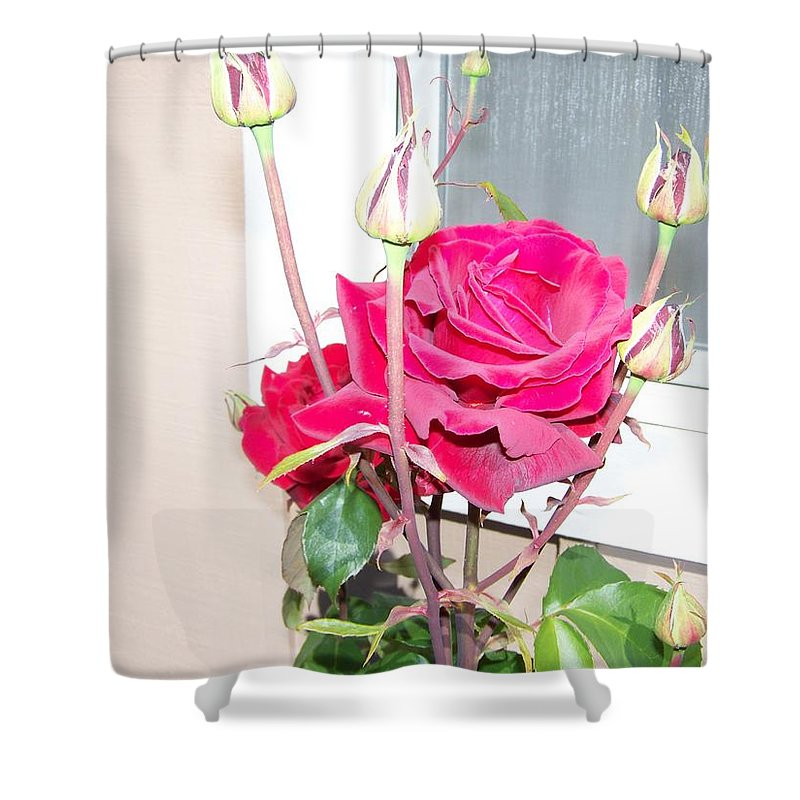 Digital Photography Artwork Shower Curtain featuring the photograph Velvet Red Rose Of Sharon by Laurie Kidd