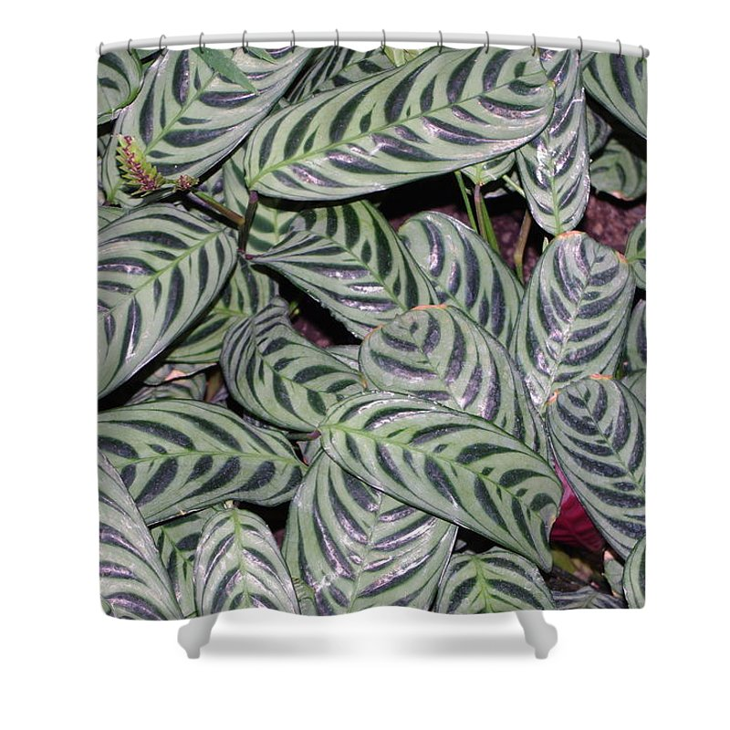 Leaves Shower Curtain featuring the photograph Verigated Green Leaves by Alice Markham