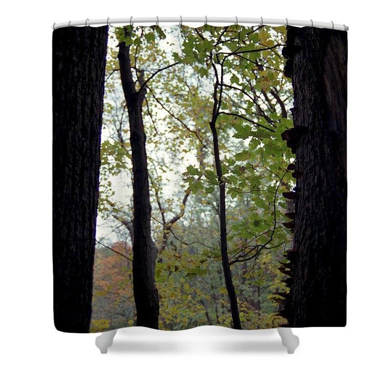 Tree Shower Curtain featuring the photograph Vertical Limits by Randy Oberg
