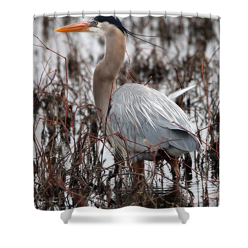 Great Blue Heron Shower Curtain featuring the photograph Very Handsome Heron 2845 by Jack Schultz