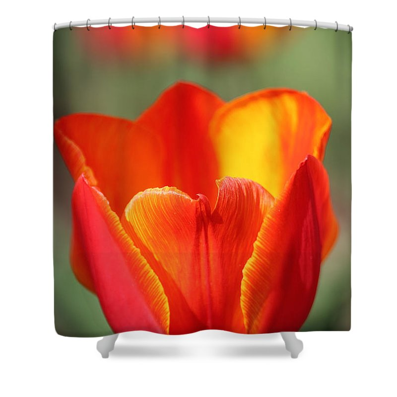 Flower Shower Curtain featuring the photograph Vibrantly Yours by Susan Herber