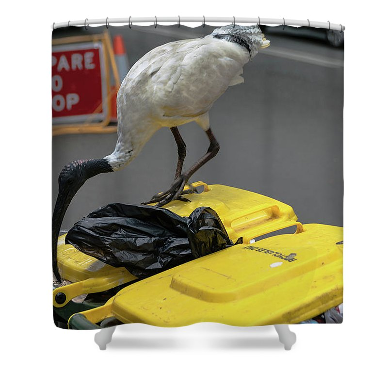 Ibis Shower Curtain featuring the photograph Victoria Street by Steven Richman