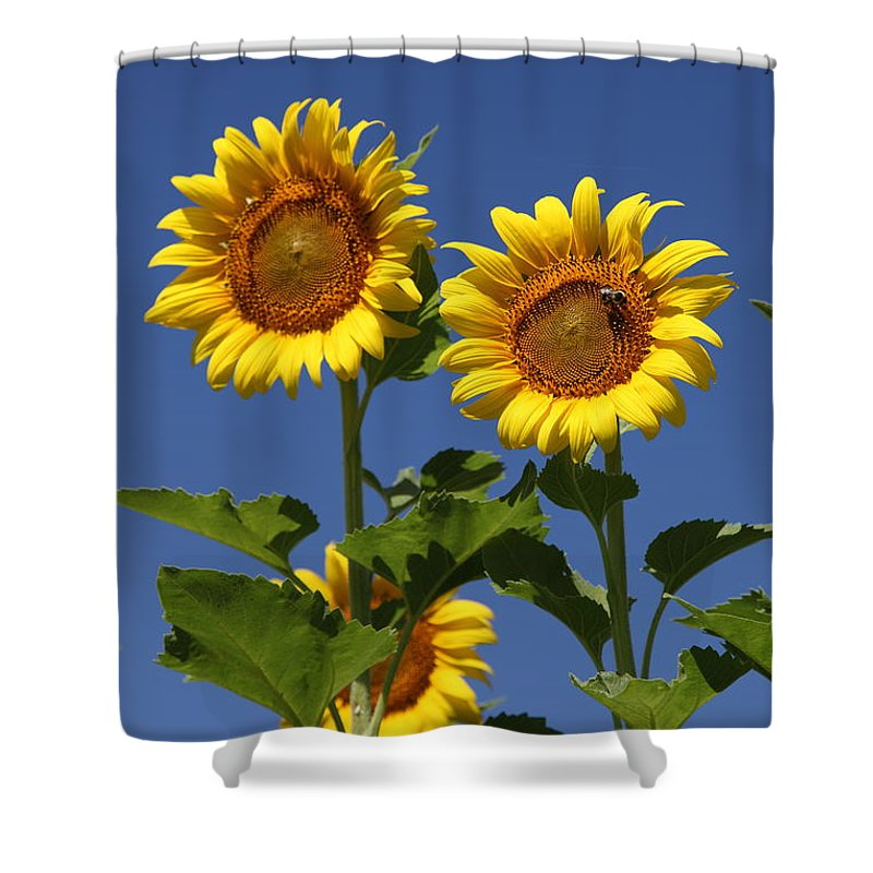Sunflower Shower Curtain featuring the photograph Viewing The Past by Amanda Barcon