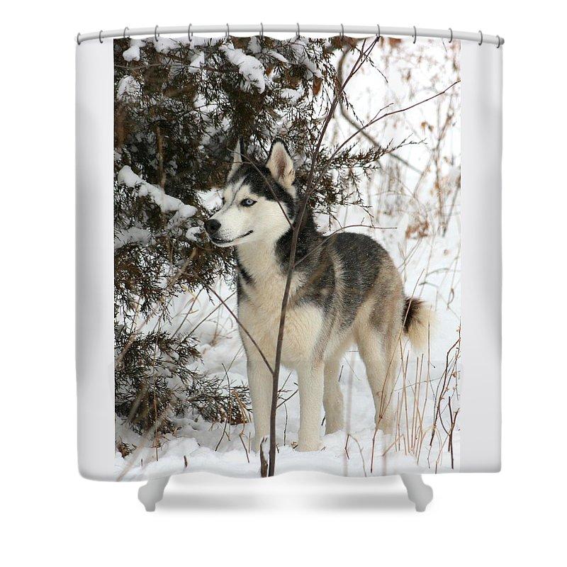 Animal Shower Curtain featuring the photograph Vigilant by David Dunham