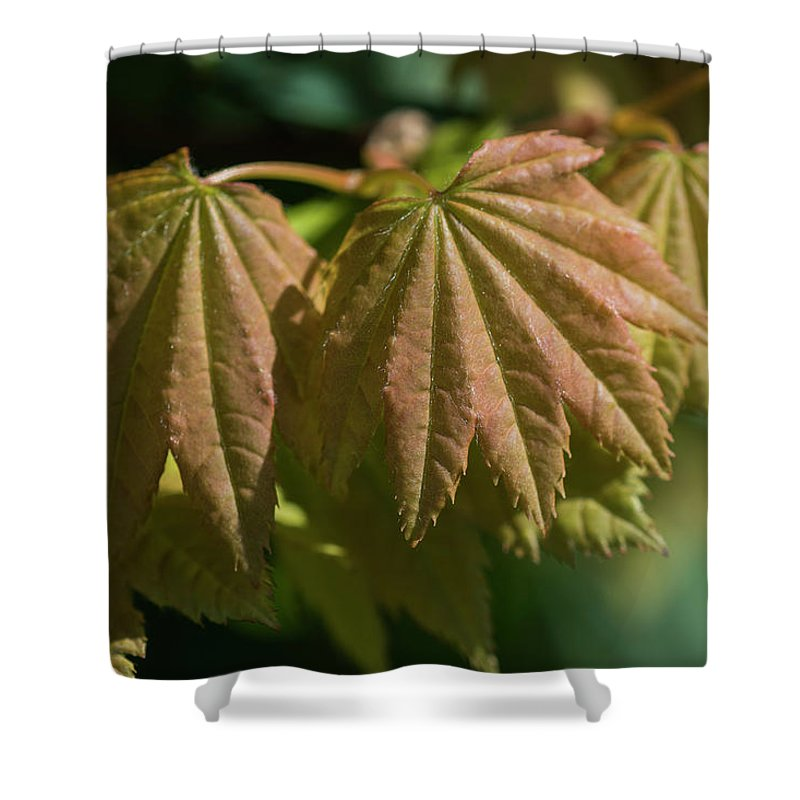 Astoria Shower Curtain featuring the photograph Vine Maple Leaves by Robert Potts