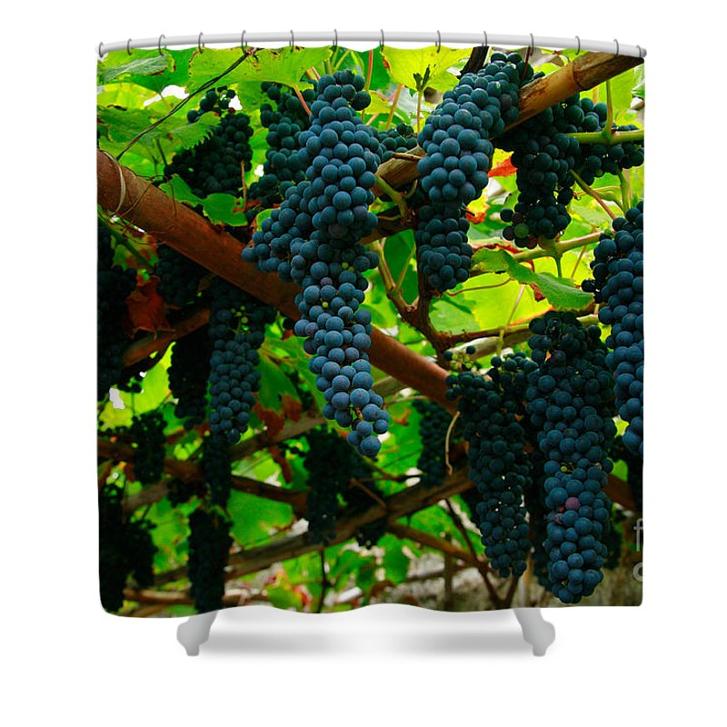 Countryside Shower Curtain featuring the photograph Vines by Gaspar Avila