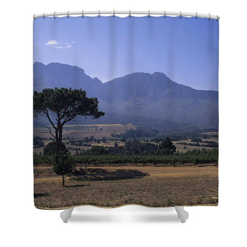 South Africa Shower Curtain featuring the photograph Vineyards Near The Helderberg Mountain by Stacy Gold