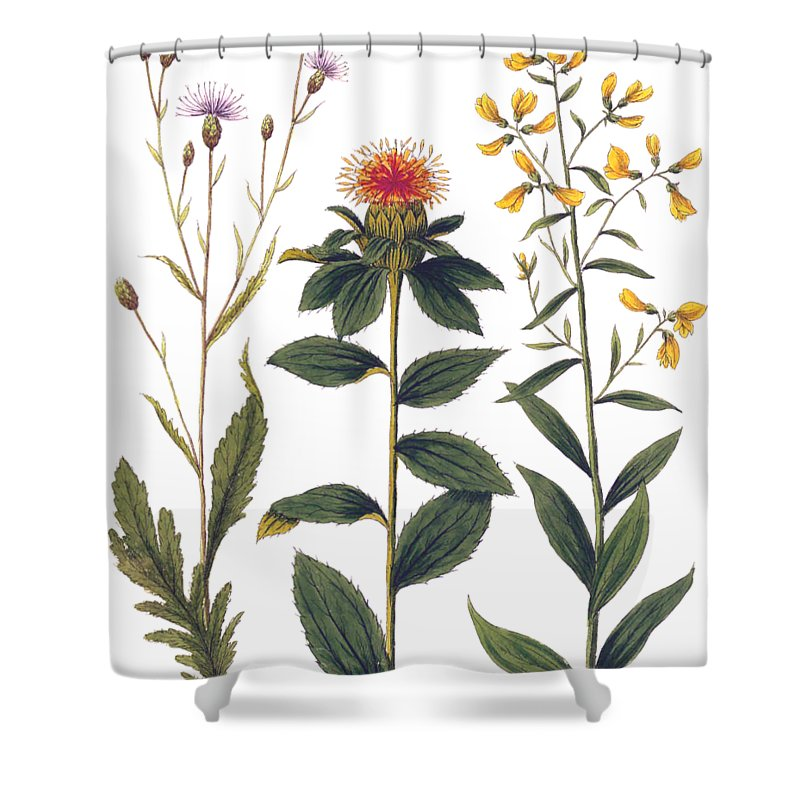 Vintage Botanical Wildflowers Shower Curtain For Sale By Antique Images