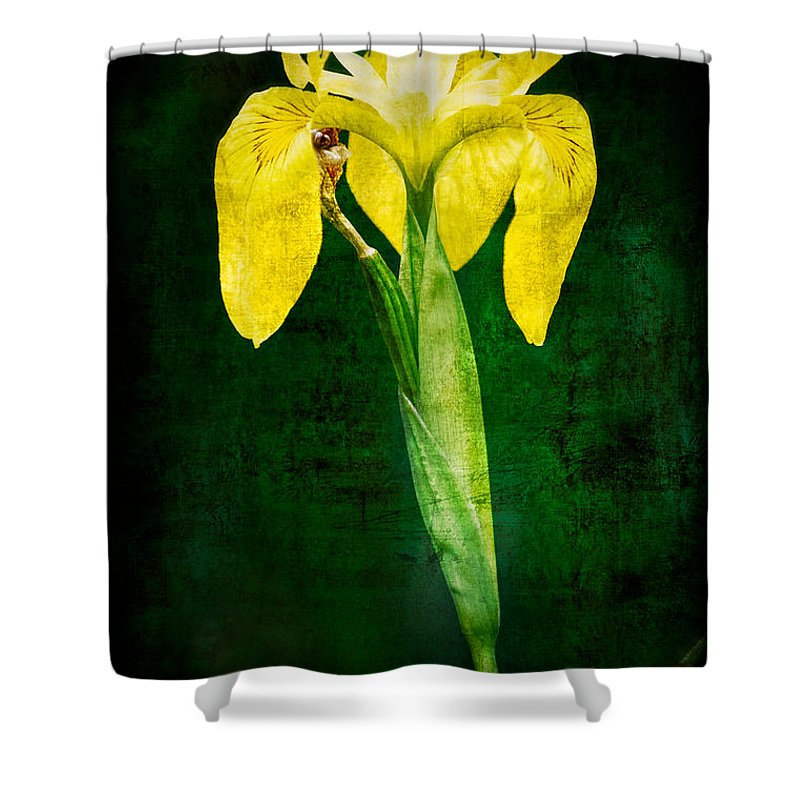 Vintage Shower Curtain featuring the photograph Vintage Canna Lily by Rich Leighton