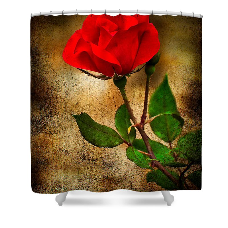 Rose Shower Curtain featuring the photograph Vintage Rose by Rich Leighton
