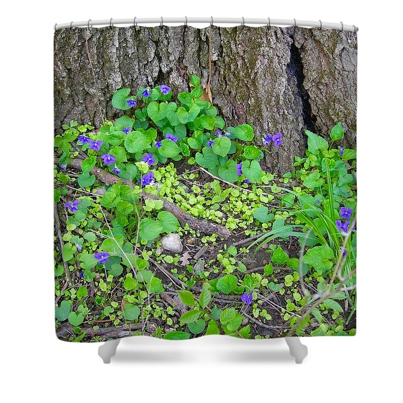 Violets Shower Curtain featuring the photograph Violets by Beth Tidd