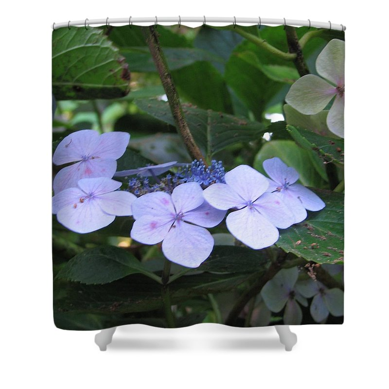 Violets Shower Curtain featuring the photograph Violets O The Green by Kelly Mezzapelle