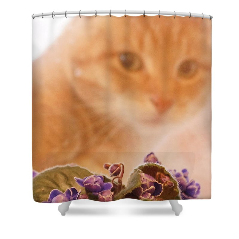 Orange Tabby Cat Shower Curtain featuring the digital art Violets with Cat by Jana Russon