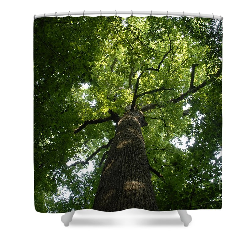 Joyce Kilmer Memorial Forest Shower Curtain featuring the photograph Virgin Canopy by David Lee Thompson
