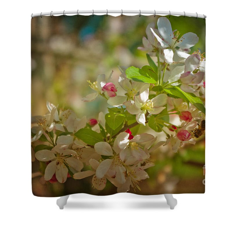 Spring Shower Curtain featuring the photograph Visiting Spring by Lisa Porier