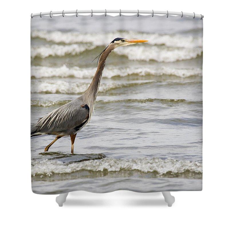 Bird Shower Curtain featuring the photograph Wading by Karen Ulvestad