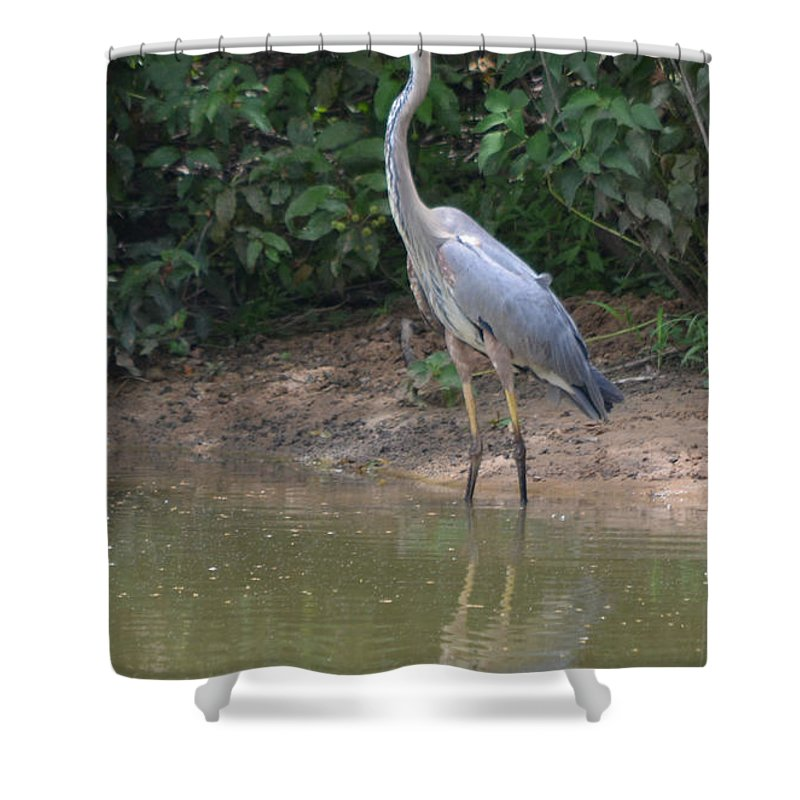 Waiting And Watching Prints Shower Curtain featuring the photograph Waiting And Watching by Ruth Housley