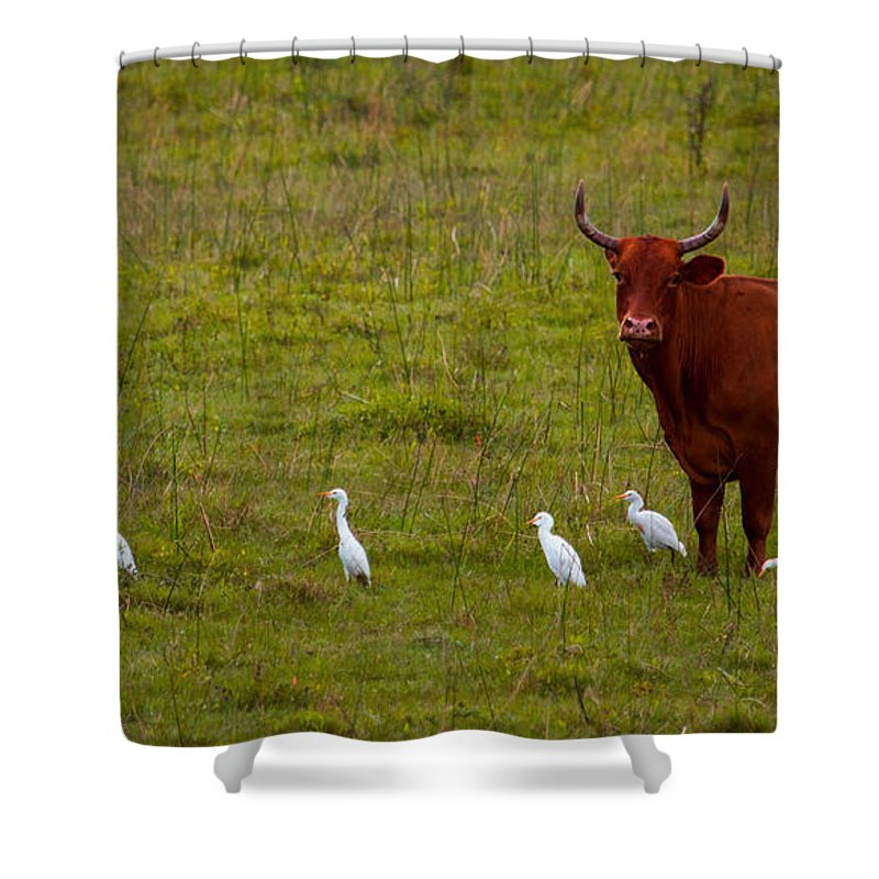 Cow Shower Curtain featuring the photograph Waiting by Charlie Grindrod