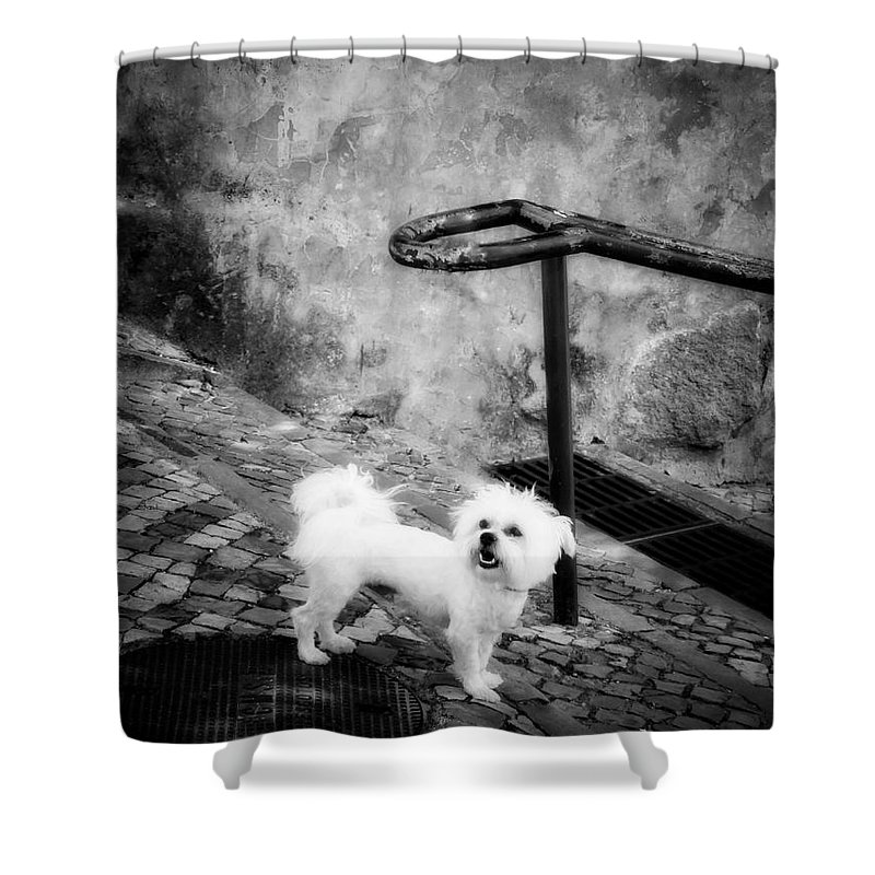 Dog Shower Curtain featuring the photograph Waiting by Diana Rajala