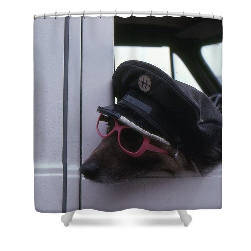 Dog Shower Curtain featuring the photograph Waiting Dog by Lyle Crump