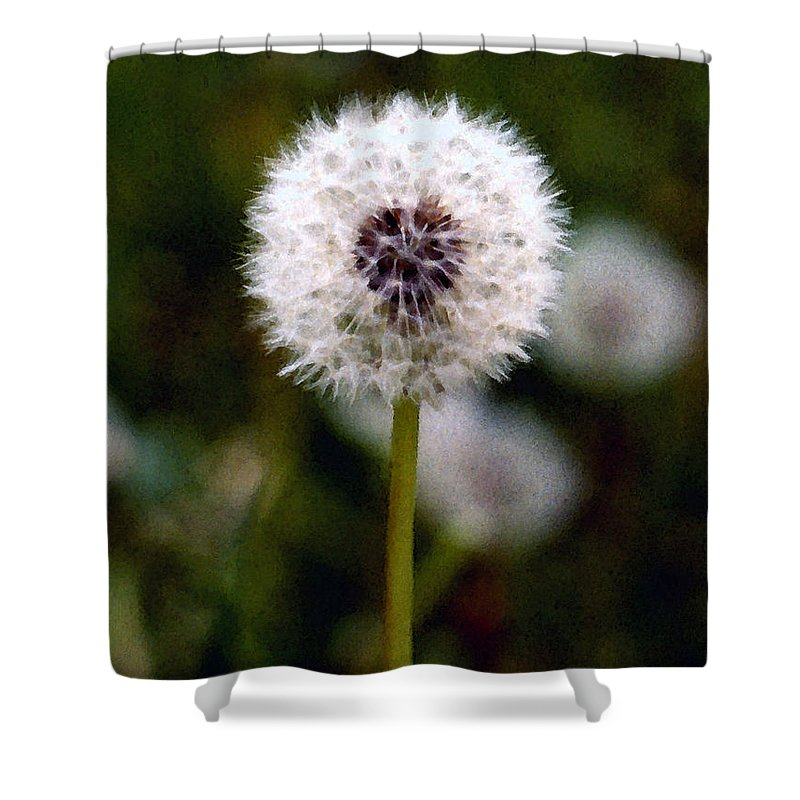 Dandelion Shower Curtain featuring the painting Waiting For A Breeze by Paul Sachtleben