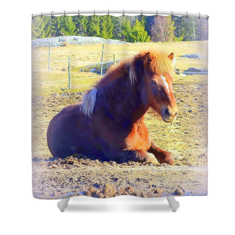 Horse Shower Curtain featuring the photograph Waiting For The Green Grass To Grow Around My Bed by Hilde Widerberg