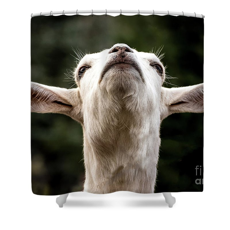 Colorado Springs Zoo Shower Curtain featuring the photograph Waiting For The Rapture by Jennifer Mitchell