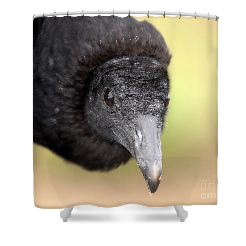 Black Vulture Shower Curtain featuring the photograph Waiting For You by David Lee Thompson