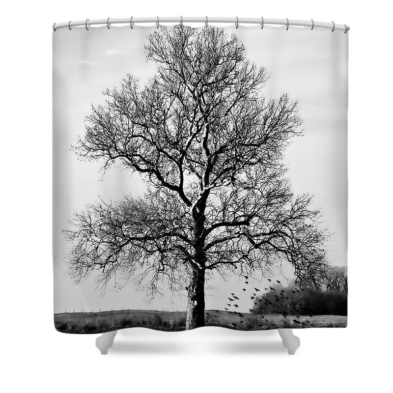 Tree Shower Curtain featuring the photograph Waiting by Lana Trussell