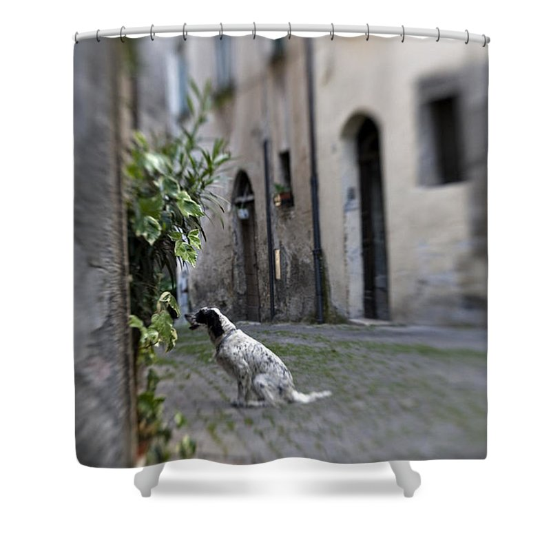 Dog Shower Curtain featuring the photograph Waiting by Marilyn Hunt