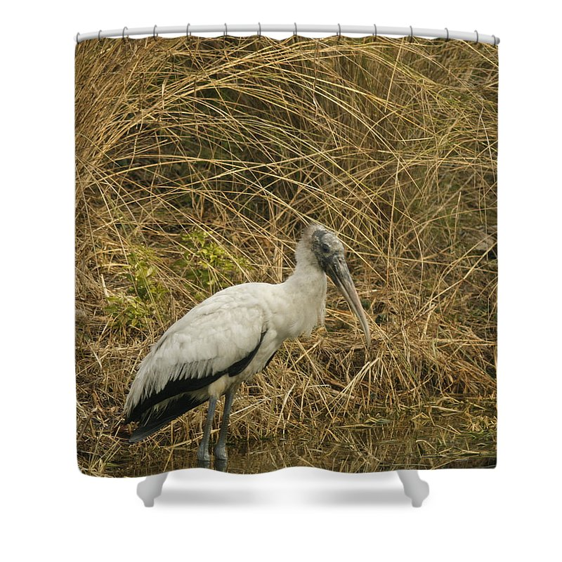 Bird Shower Curtain featuring the photograph Waiting by Phill Doherty