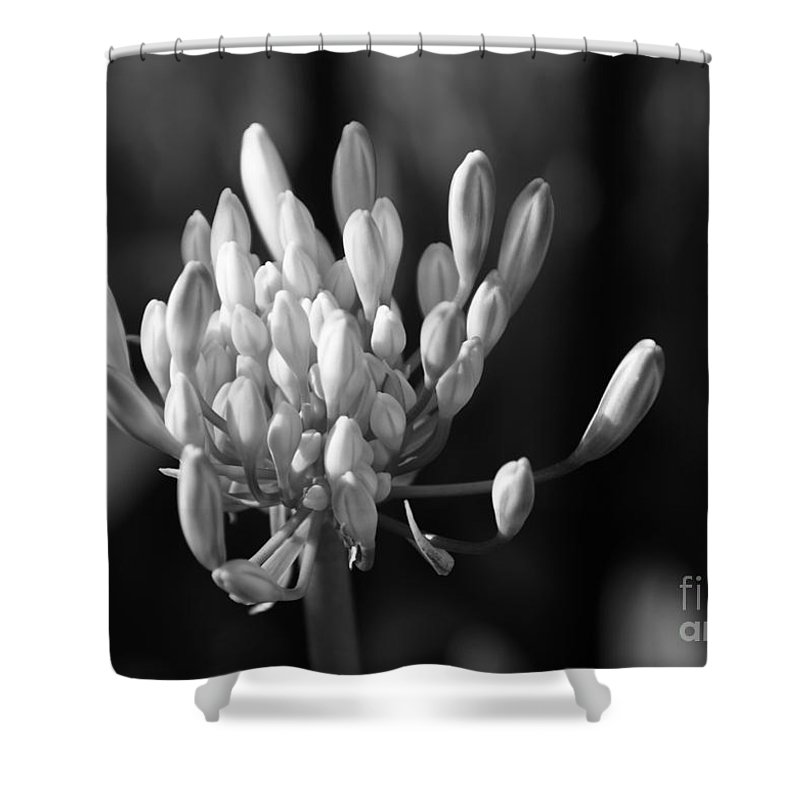 Floral Shower Curtain featuring the photograph Waiting To Blossom Into Beauty - Bw by Linda Shafer