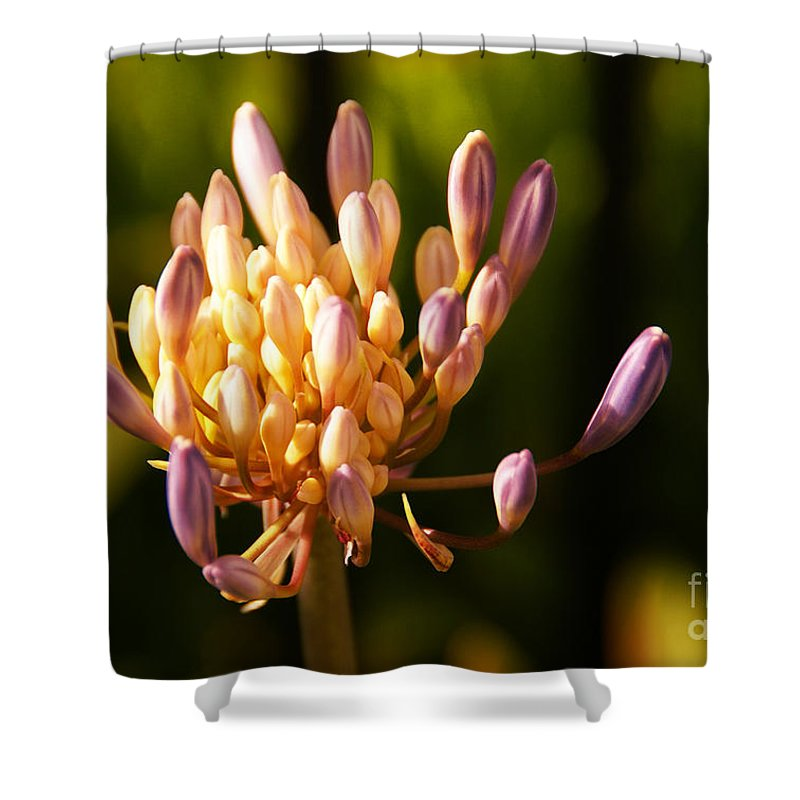 Flower Shower Curtain featuring the photograph Waiting To Blossom Into Beauty by Linda Shafer