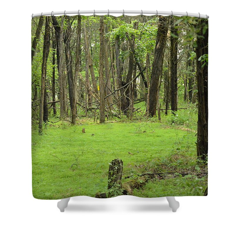 Landscape Shower Curtain featuring the photograph Walk In The Woods by Erik Waltz