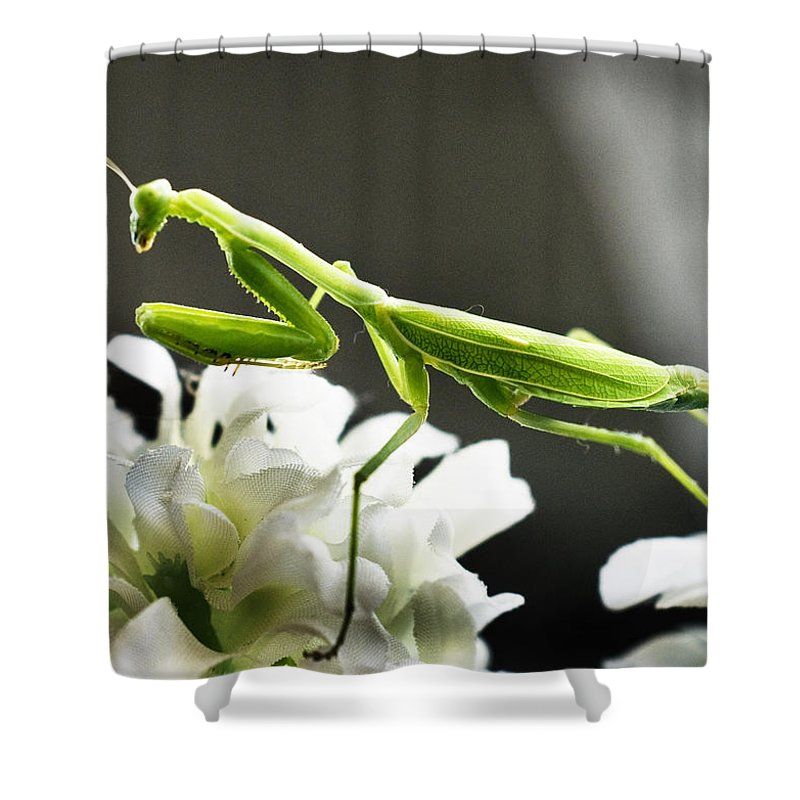 California Shower Curtain featuring the photograph Walkin Tall On Silk by Norman Andrus