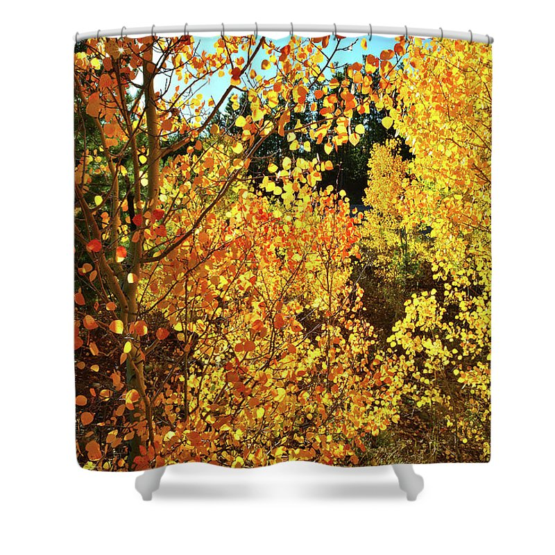 Colorado Shower Curtain featuring the photograph Walking Among The Aspens At Dillon Reservoir by Ray Mathis