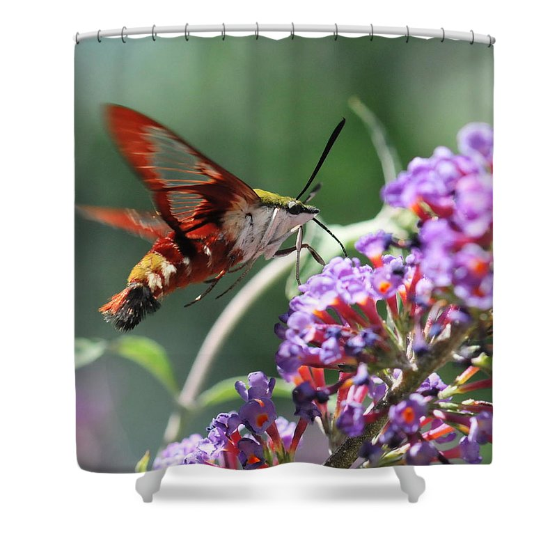 Hummingbird Moth Shower Curtain featuring the photograph Walking On Petals by Michelle DiGuardi