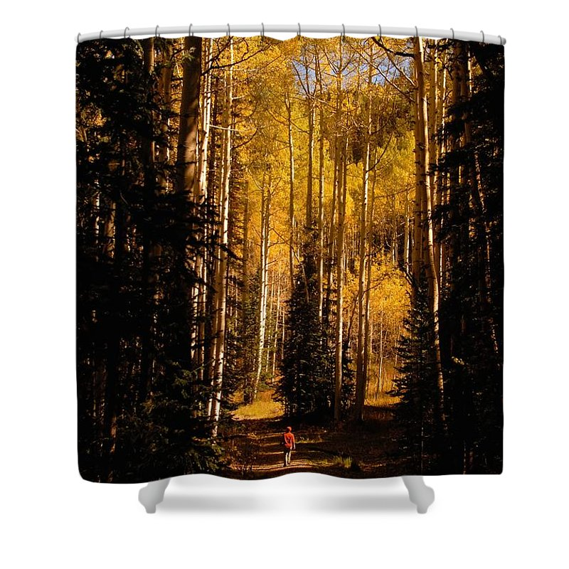 Landscape Shower Curtain featuring the photograph Walking With Aspens by David Lee Thompson