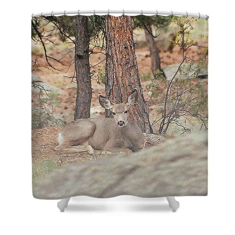 Colorado Shower Curtain featuring the photograph Wary Siesta by Bob W Brown