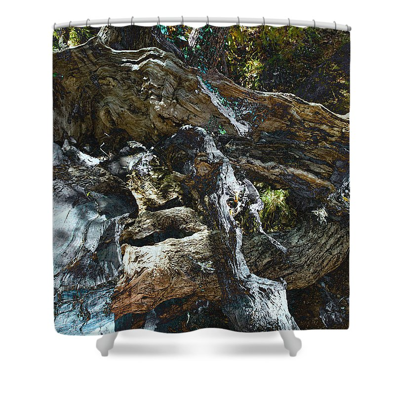 Trees Shower Curtain featuring the photograph Washed Away by Kelly Jade King