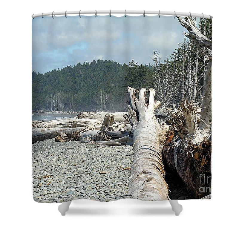 Tree Shower Curtain featuring the photograph Washington Beach by Diane Greco-Lesser