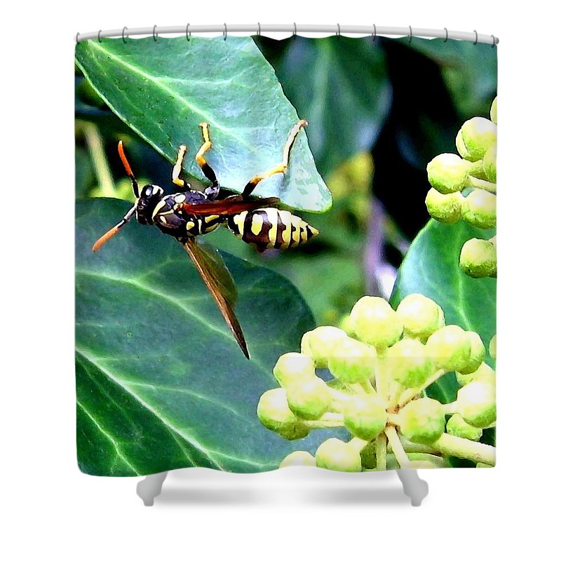 Wasp Shower Curtain featuring the photograph Wasp On The Ivy by Will Borden