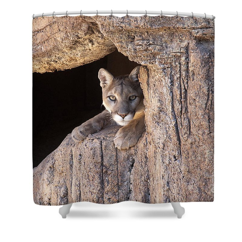 Cougar Shower Curtain featuring the photograph Watchful Eyes by Sandra Bronstein