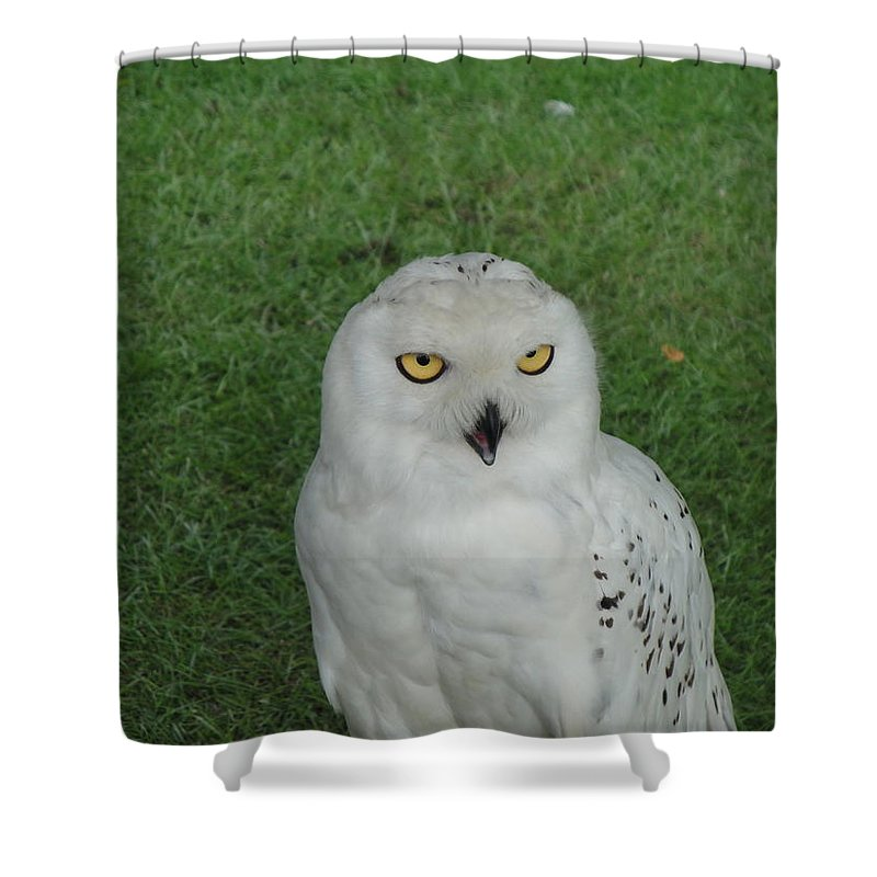 Owl Shower Curtain featuring the photograph Watching Owl by Susan Baker