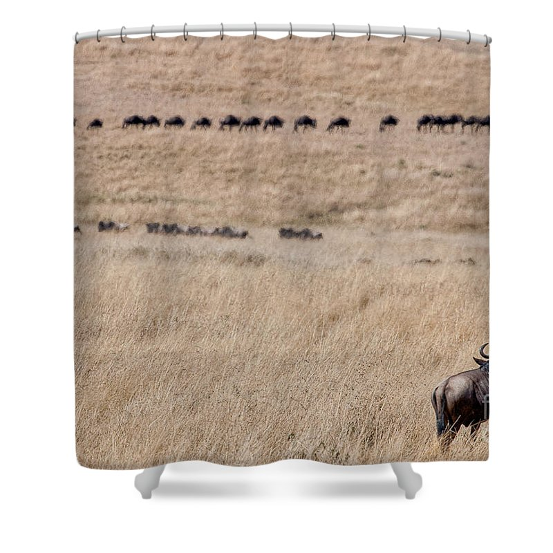 Africa Shower Curtain featuring the photograph Watching The Herd by Colette Panaioti