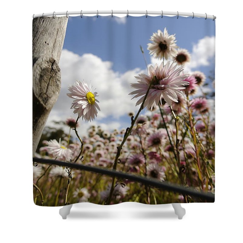 Fence Shower Curtain featuring the photograph Watching The Sun by Oscar Moreno