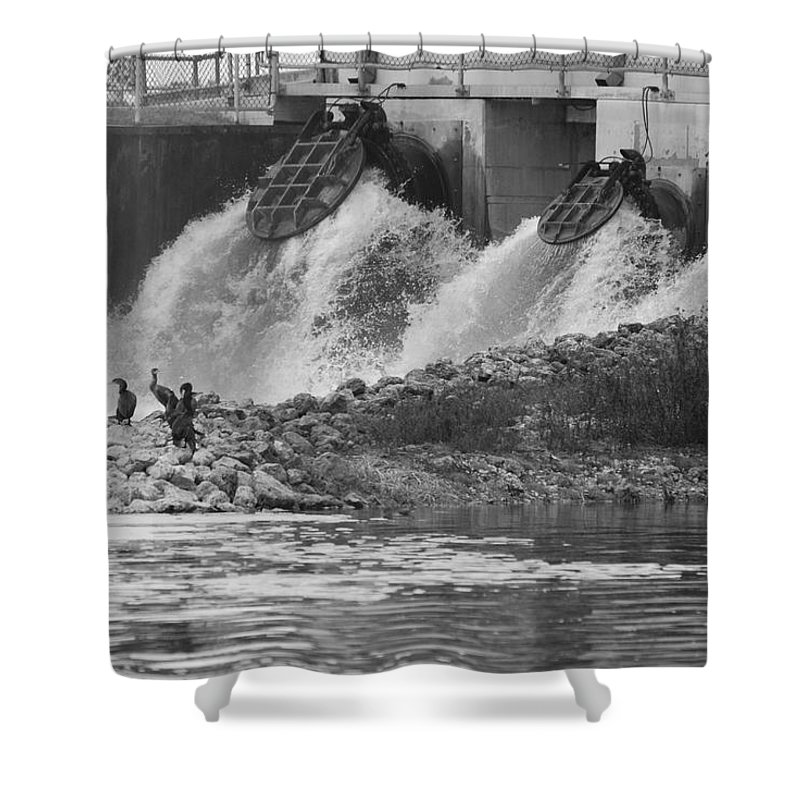 Water Shower Curtain featuring the photograph Water Birds by Rob Hans