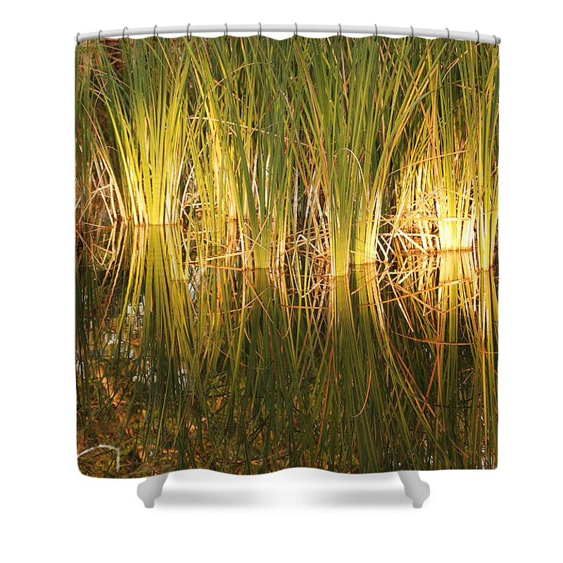 Grass Shower Curtain featuring the photograph Water Grass In Sunset by Rob Hans