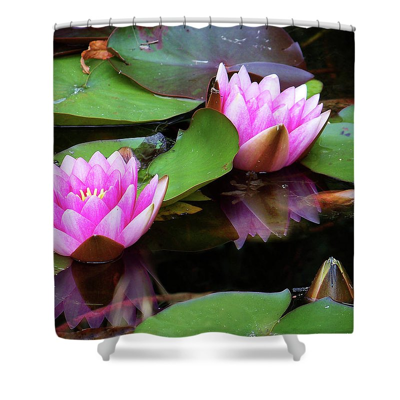 Water Lilies Shower Curtain featuring the photograph Water Lilies by Anthony Jones